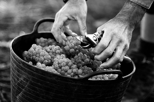 Picking, Southern Highlands, Agriculture Photography